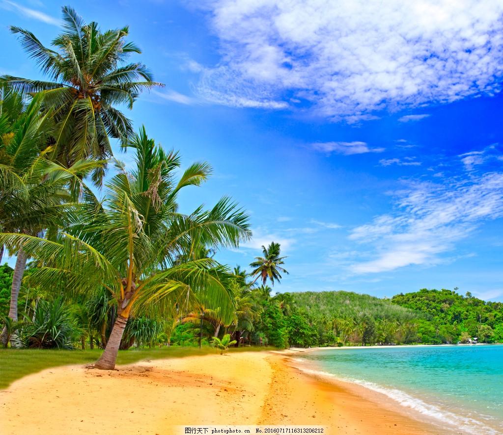 沙滩椰子树图片