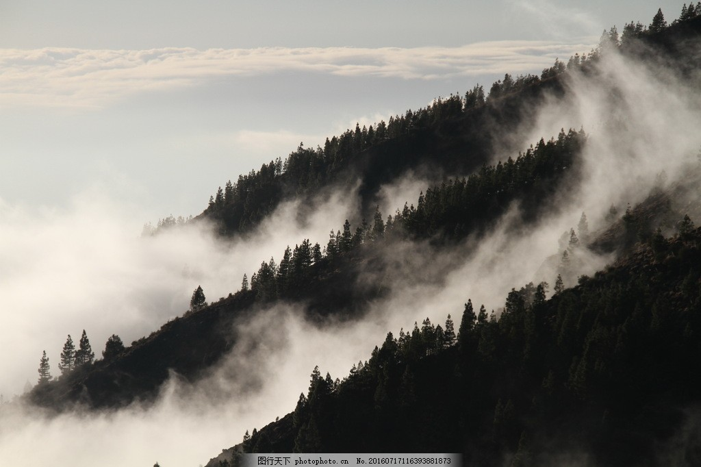 唯美云雾树林风景图片