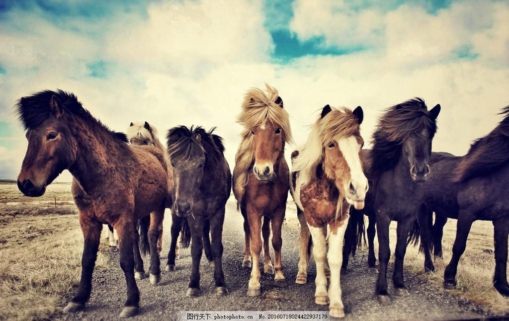 设计图库 生物世界 野生动物  一群马 一群 马 多头 群马 骏马 草原马