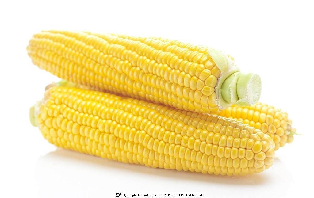 唯美 食物 食品 营养 健康 粮食 原料 玉米 摄影 餐饮美食 食物原料