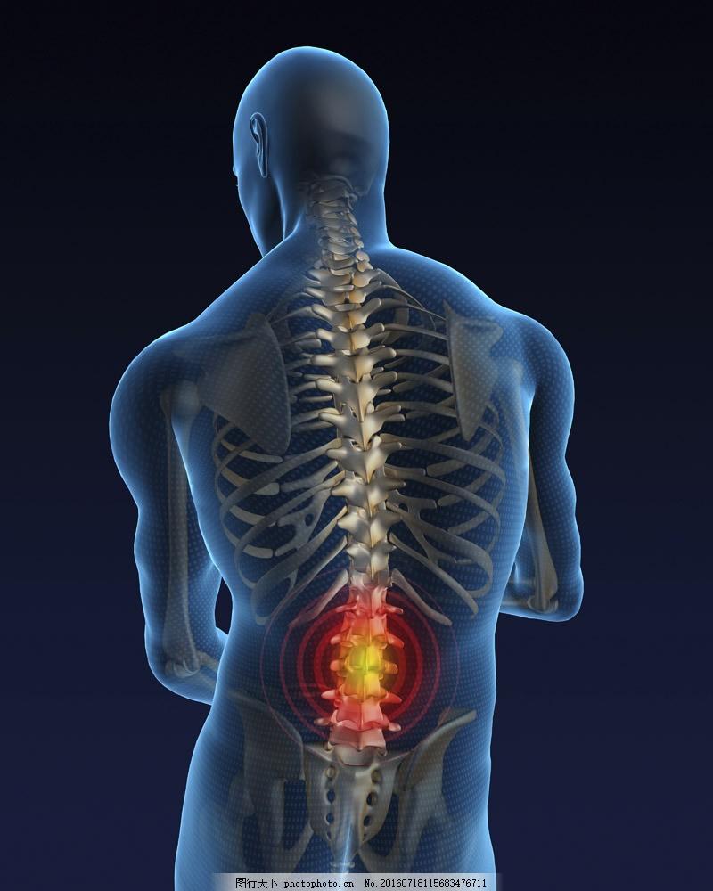 腰部骨骼固)�_腰部关节疼痛 腰部关节疼痛图片素材 人体器官 人体骨骼 骨骼结构