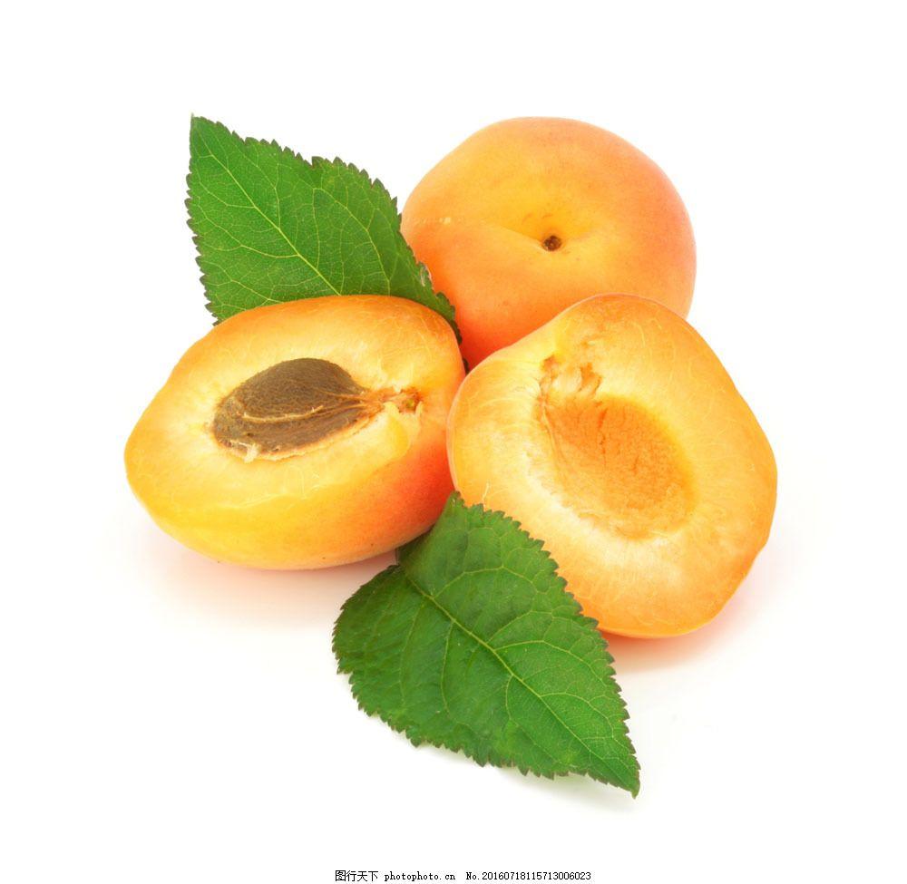 杏子图片素材 杏子 新鲜水果 梅子 蔬菜图片 餐饮美食 图片素材