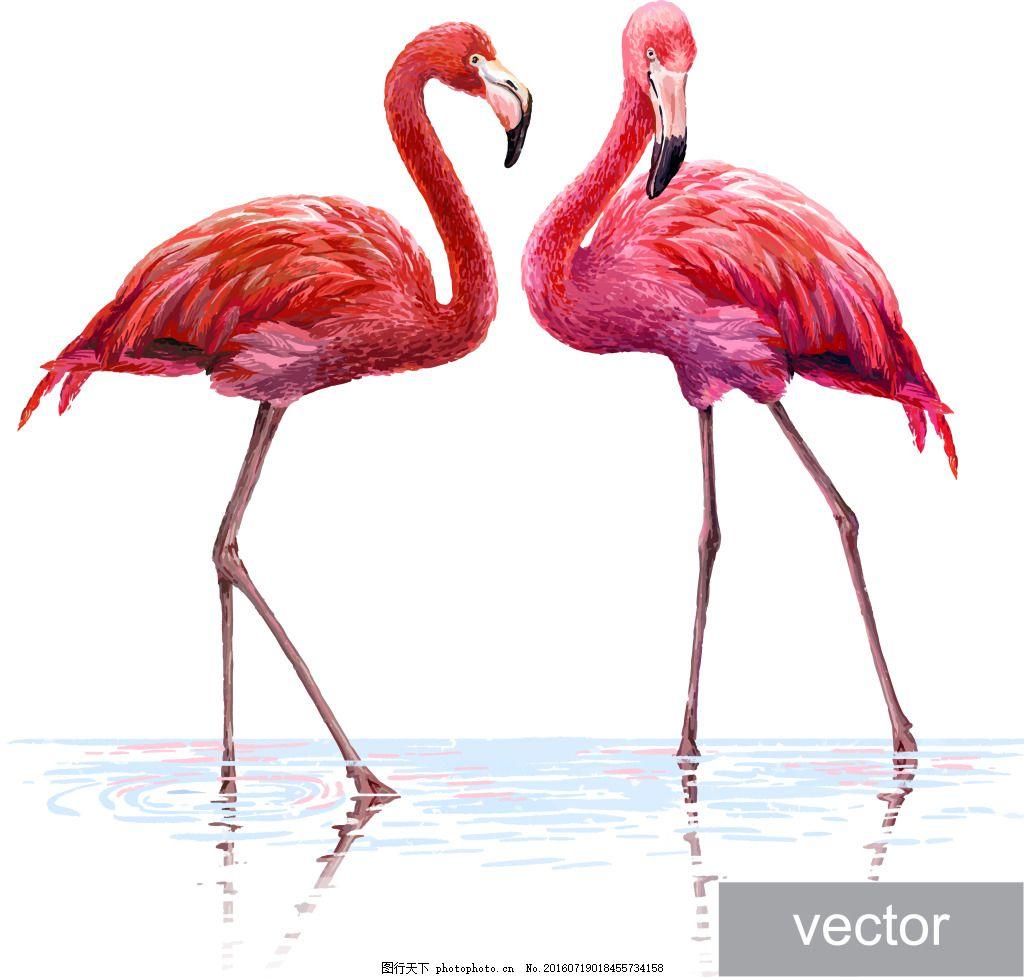 红色的丹顶鹤 动物 手绘 美丽