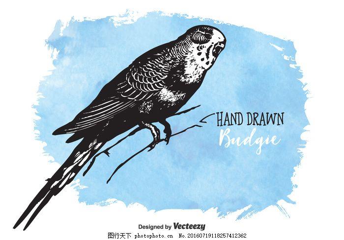 免费矢量绘制的鹦鹉 虎皮鹦鹉 矢量绘制 手绘 素描 羽毛      漂亮