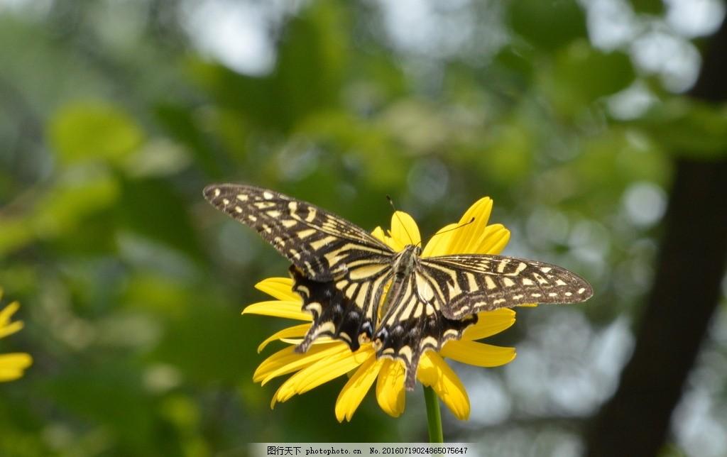 昆虫 植物世界 植物 花卉 花朵 花枝 蝶 美丽蝴蝶 蝴蝶与花 动物世界