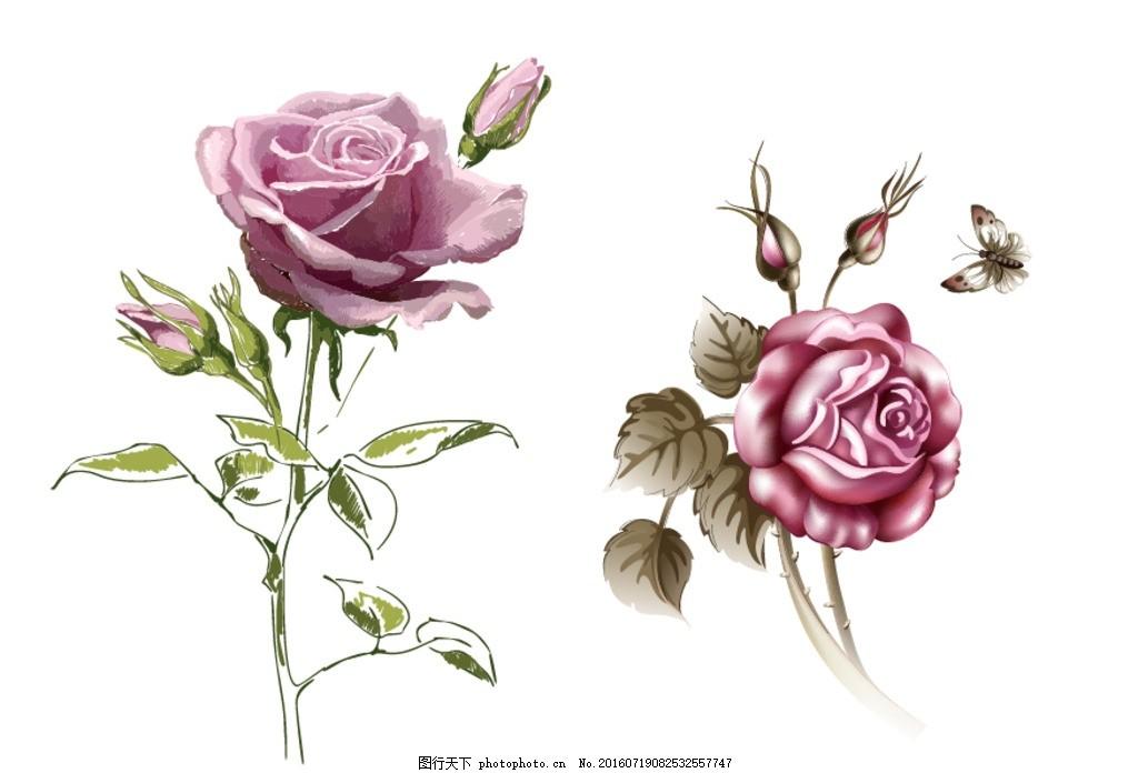 玫瑰花 牡丹 玫瑰花 线条 玫瑰花卉 手绘玫瑰 古典 时尚 绽放 玫瑰