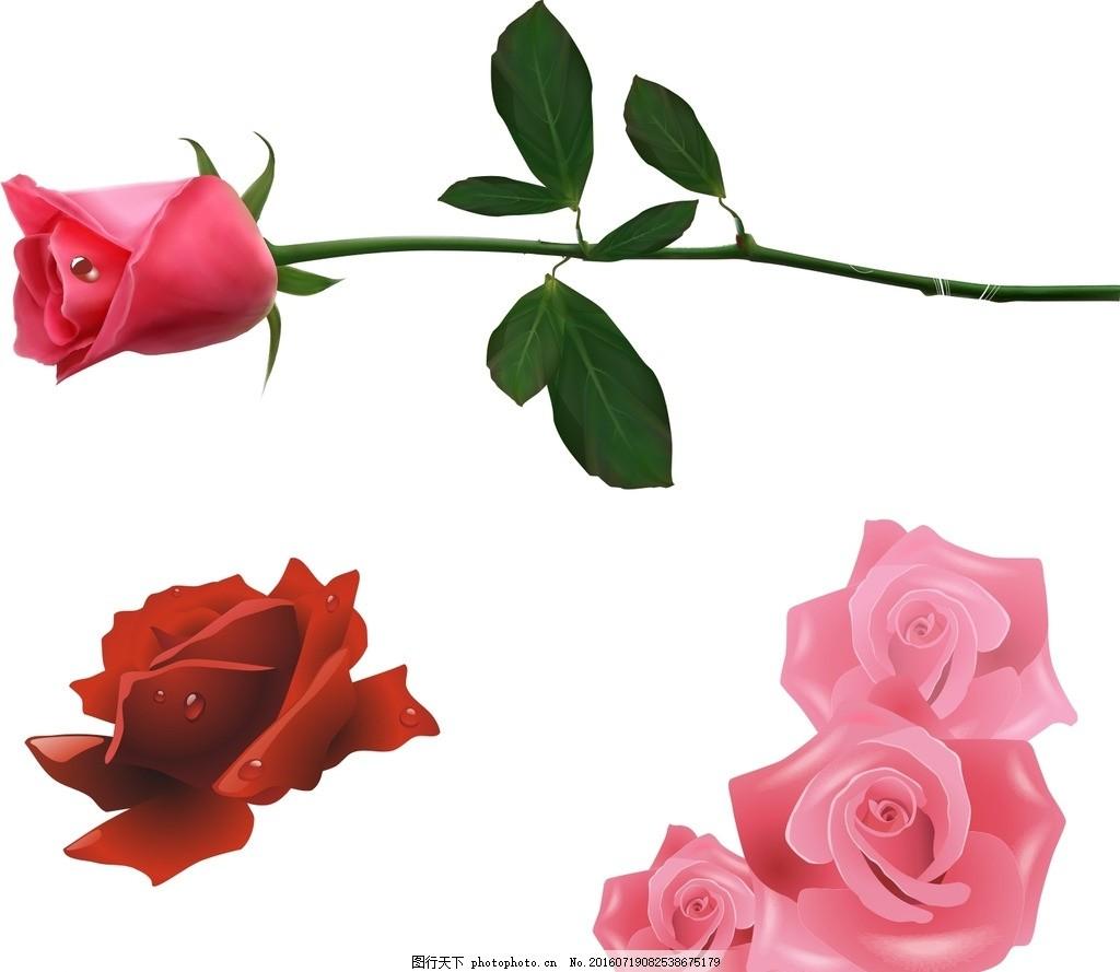 一枝玫瑰花 红玫瑰