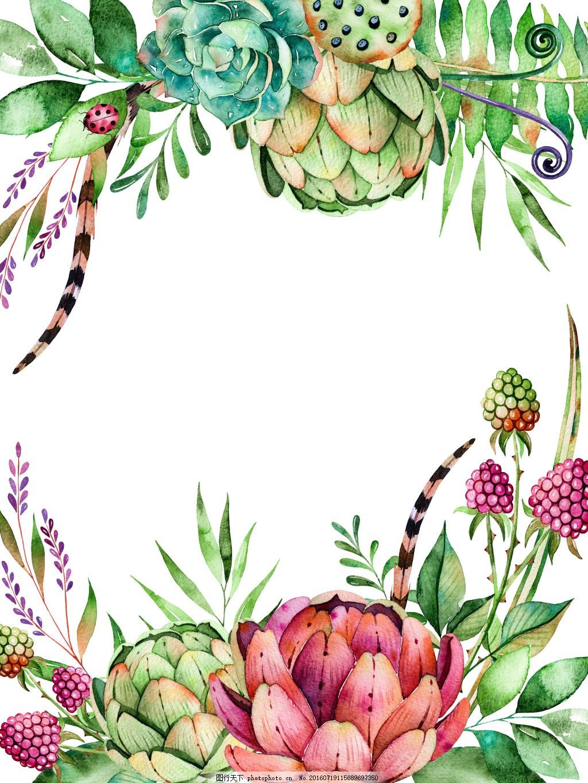 国外手绘水彩多肉植物昆虫花朵叶子等