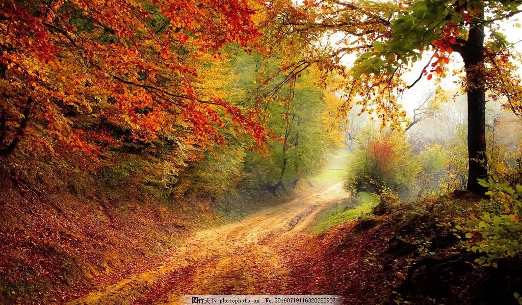 秋天树林风景图片