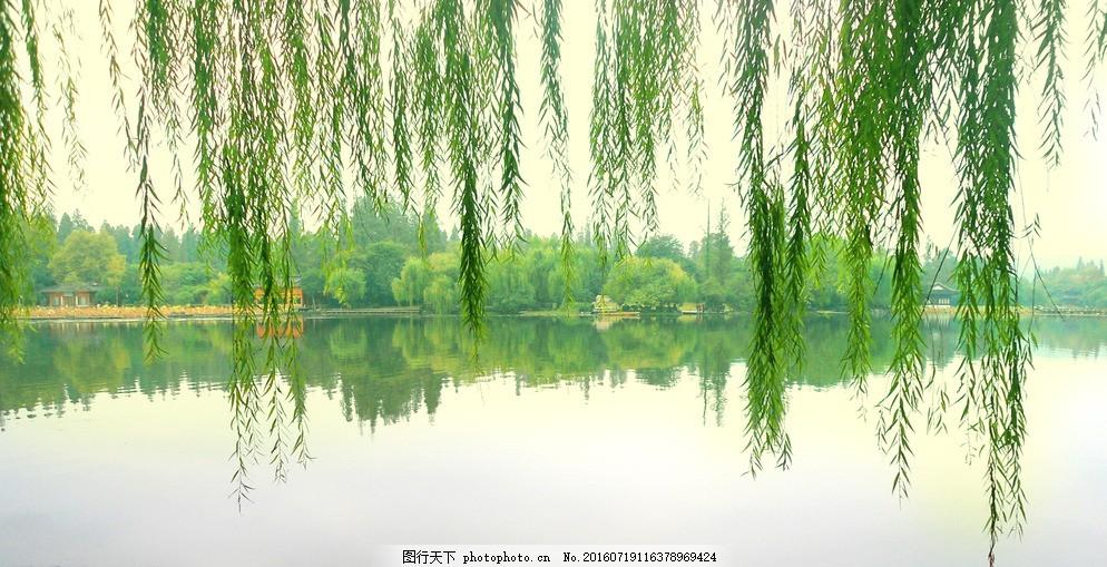 杭州西湖 杨柳 西湖美景 柳树 垂柳 西湖风景 摄影 旅游摄影