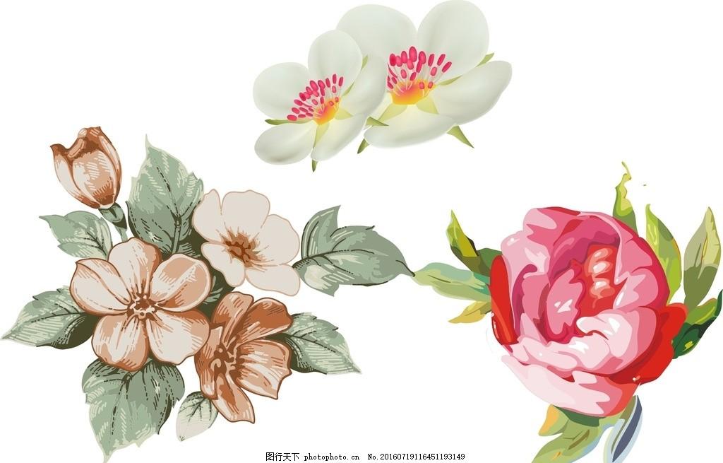 欧式花朵 牡丹花 手绘素材 矢量花朵 矢量素材 盛开 绽放 水彩花卉