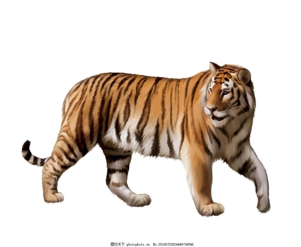 老虎 凶猛动物 东北虎 矢量图 华南虎