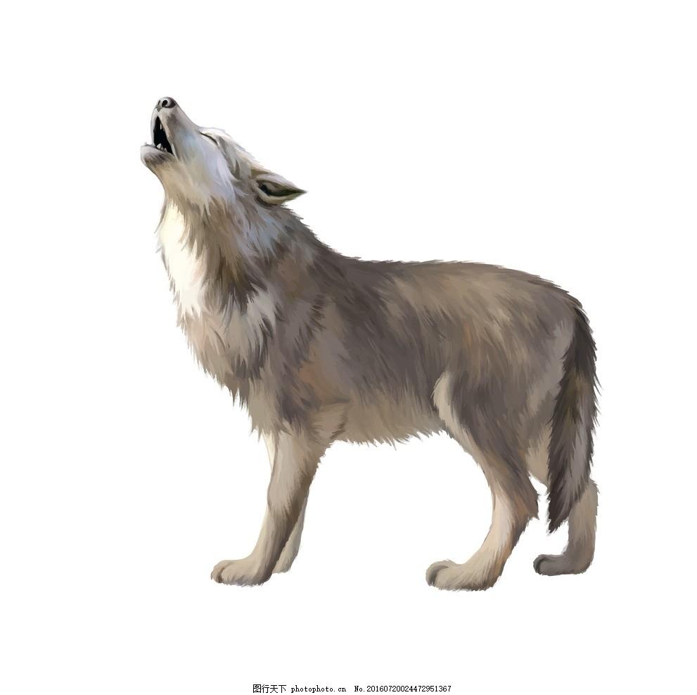 孤傲的狼 危险生物 矢量图 仰天长啸的狼 孤傲的一匹狼 动物