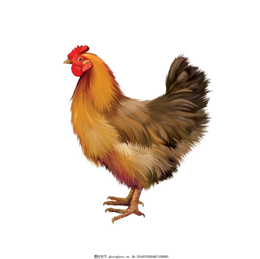 大公鸡 家禽 动物 十二生肖 矢量图