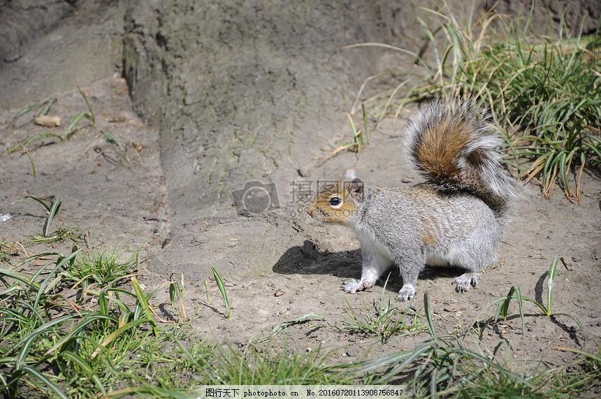 松鼠 动物 性质 森林 树 红色