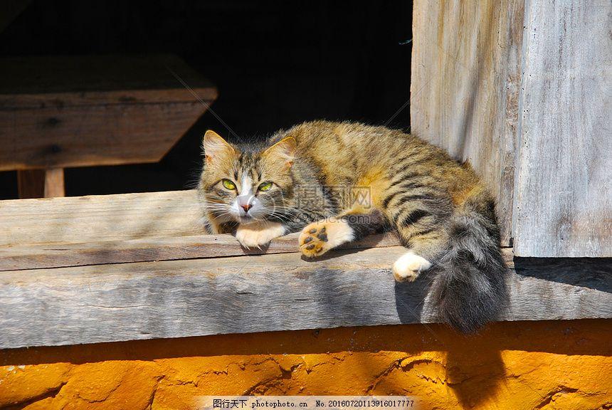 趴在窗前的猫 猫 窗前 动物 宠物 可爱 猫爪     红色 jpg