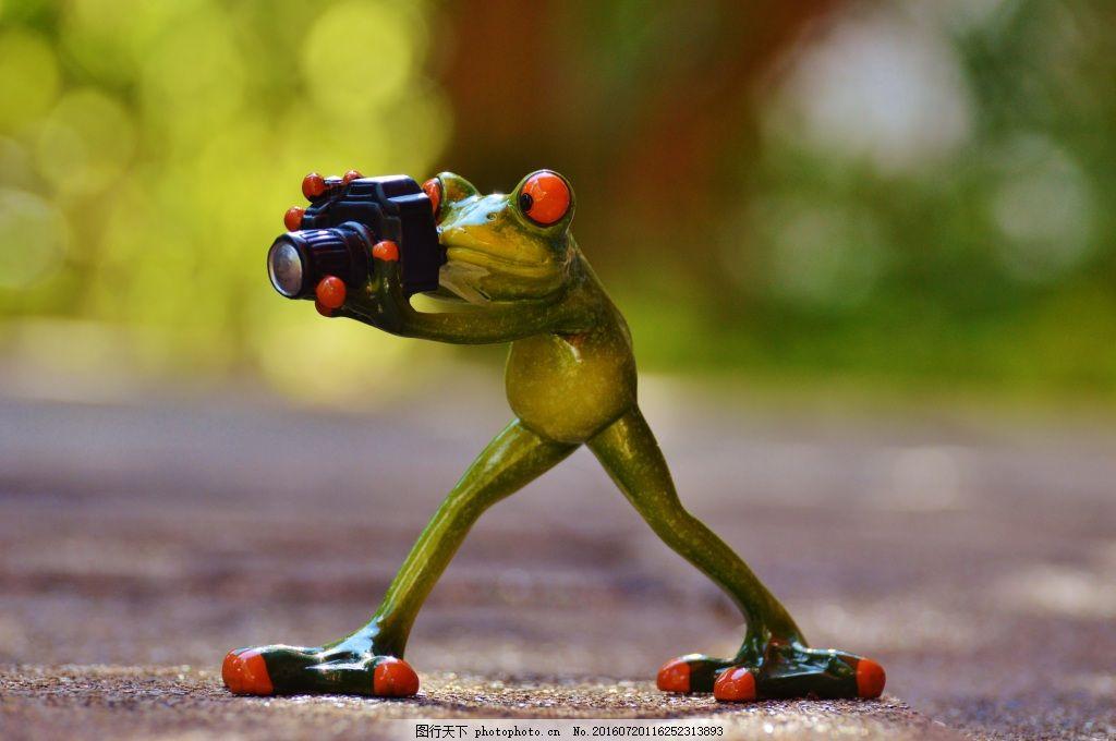 动物世界青蛙 摄影师 滑稽 绿色 乐趣 相机 照片 黄色