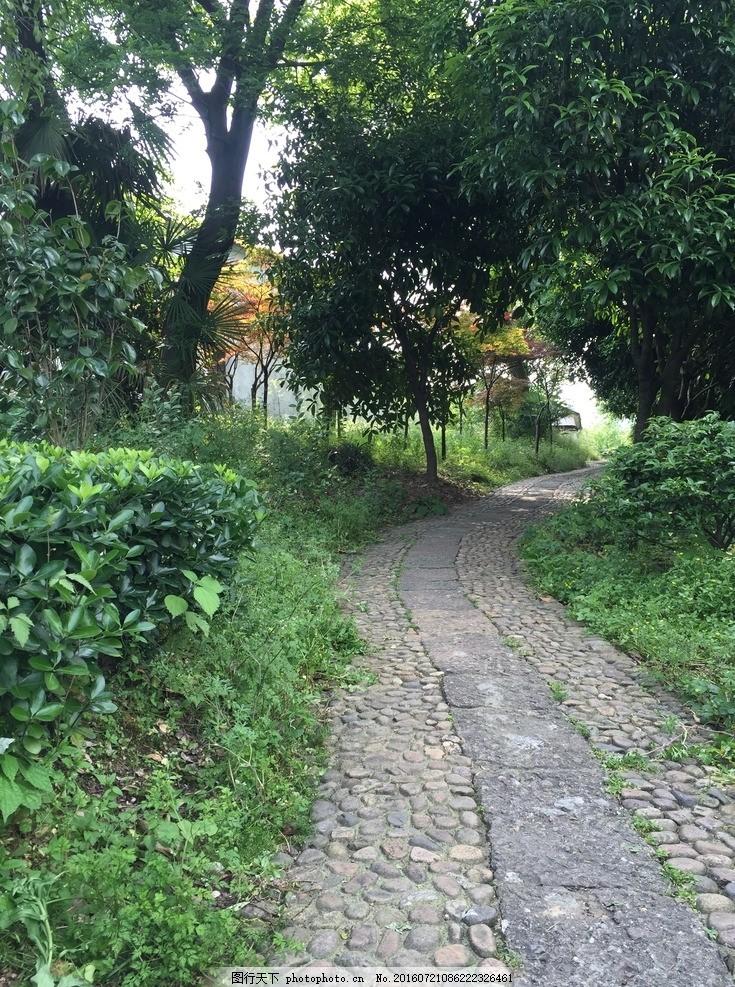 幽径 小路 幽静的路 摄影 自然景观 自然风景