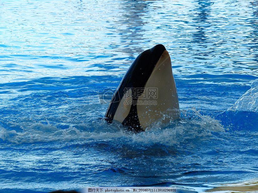 水中的海豚 海豚 水 跳水 表演 动物园 演出     红色 jpg