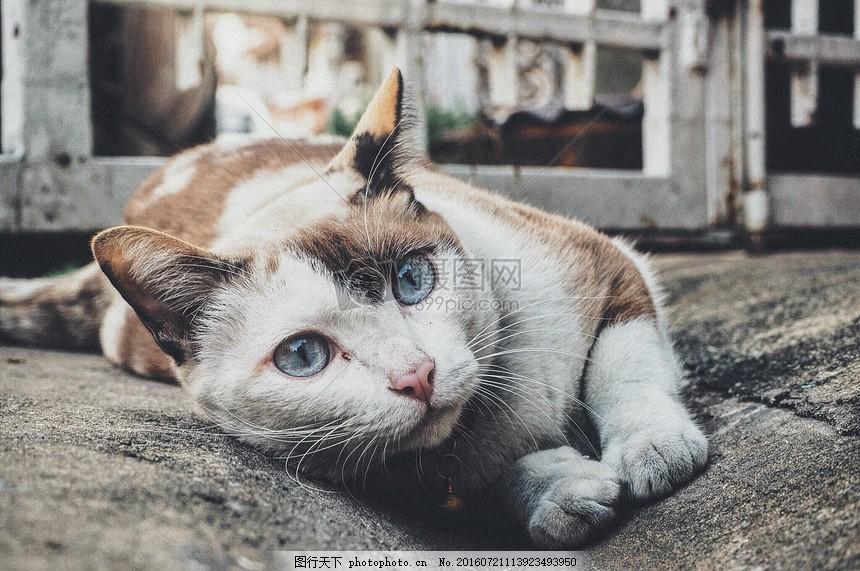 趴在地上的小猫 盯着 基蒂 宠物 可爱猫咪 趴着 眼睛 小猫 无辜 猫爪