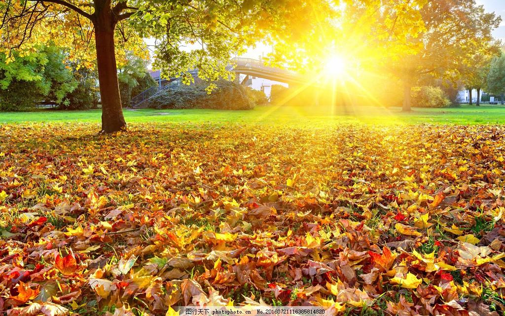 唯美清晨阳光风景图片