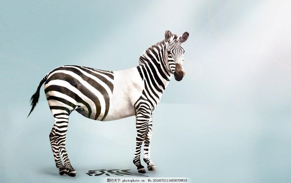 可爱斑马图片素材下载 黑白 条纹 可爱 马 斑点