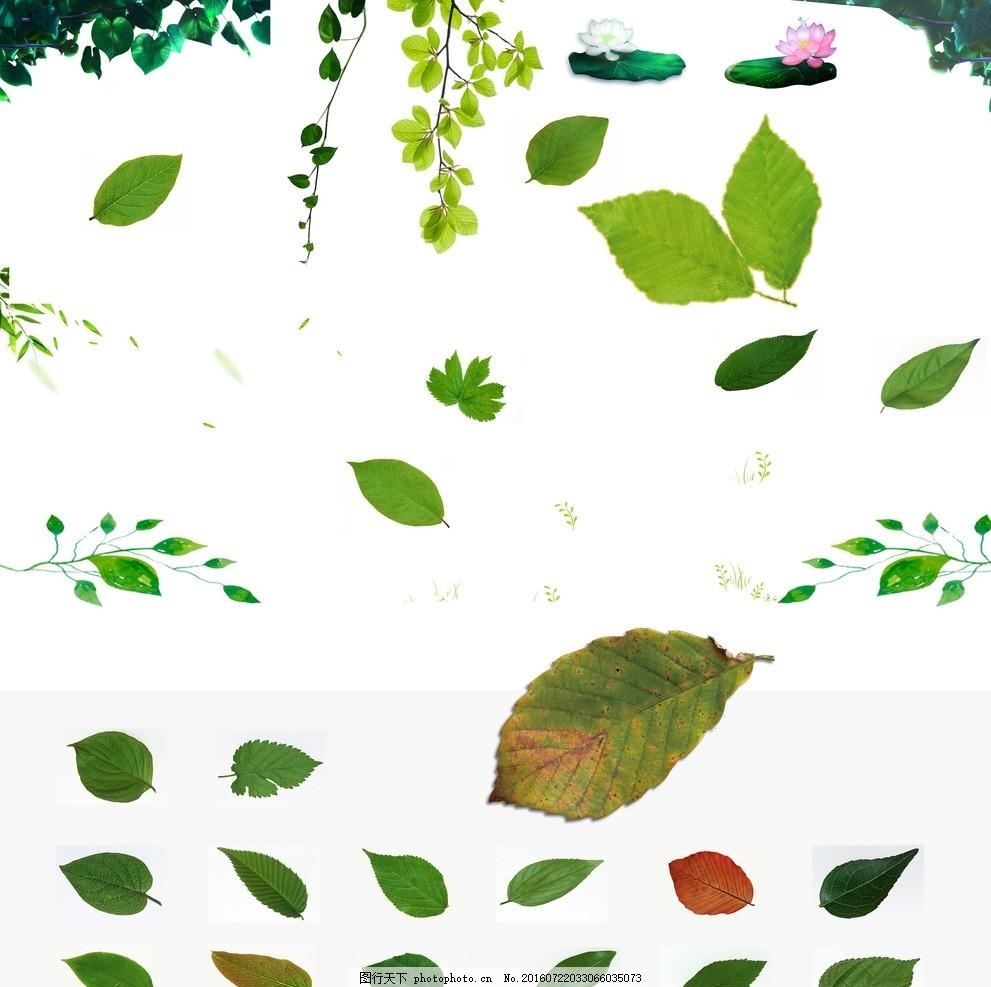 叶子素材 绿色 树叶 小清新 源文件 植物 水彩 树枝 茶叶 各种树叶图片