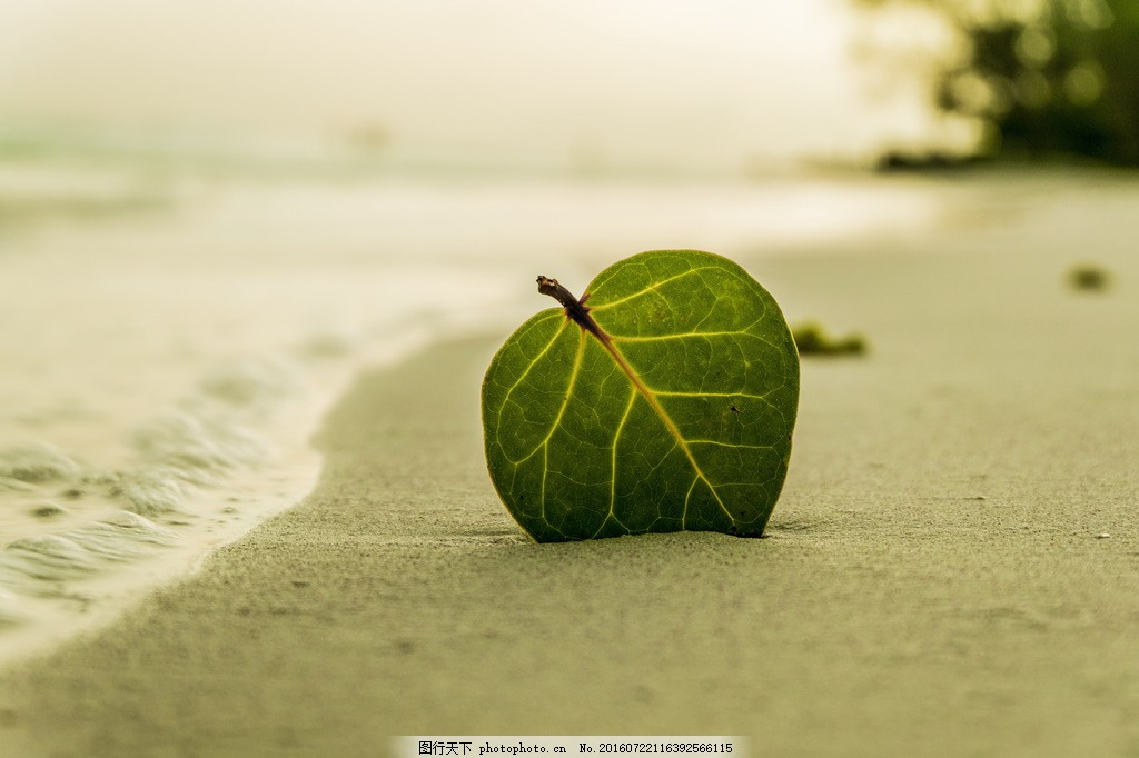 清新海边树叶图片大全