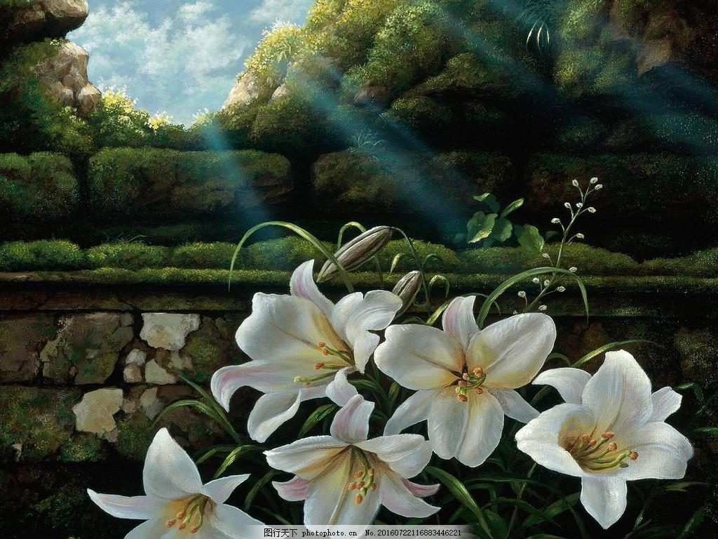 唯美百合花 高清唯美百合花图片下载 白色 花色 花卉 香水百合