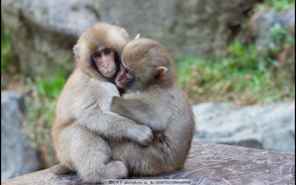 动物园两只小猴子图片