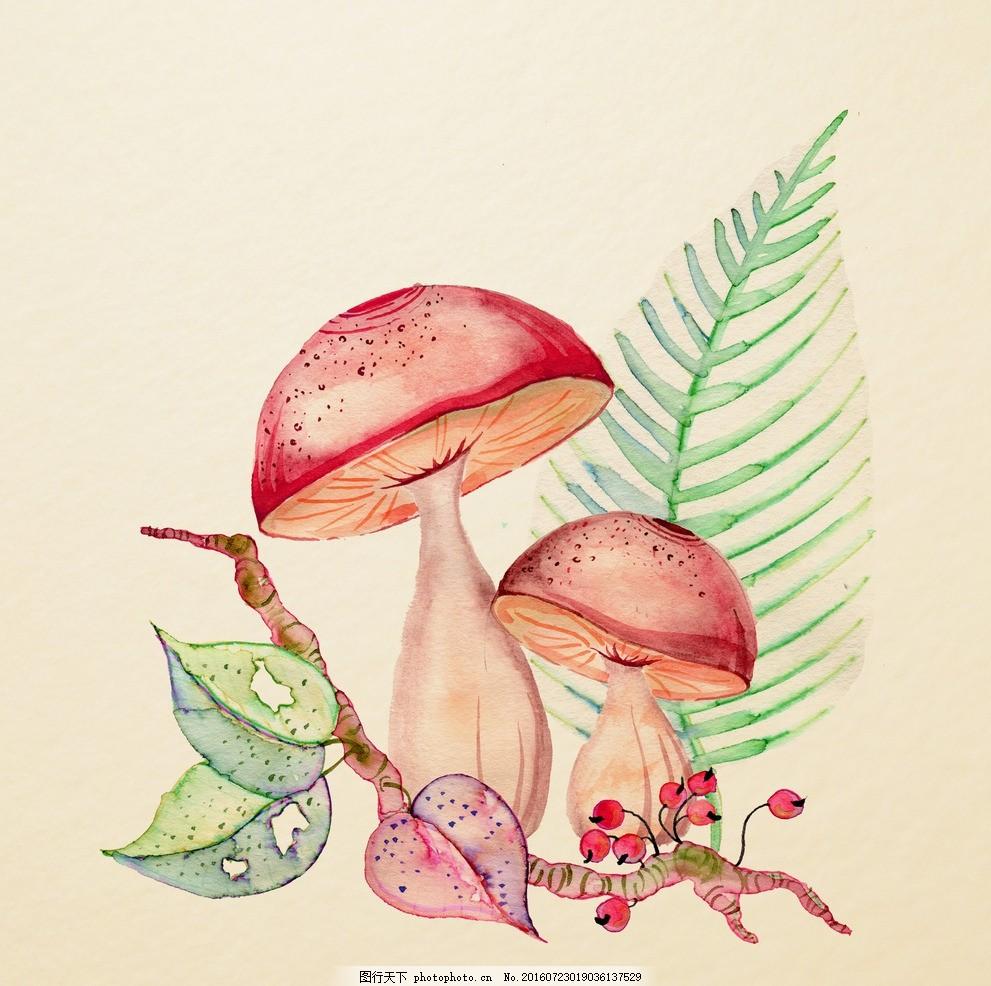 水彩菌类植物 水彩画 小清新 花虫画 虫鸟花 虫鸟画 花鸟画 画鸟 画小