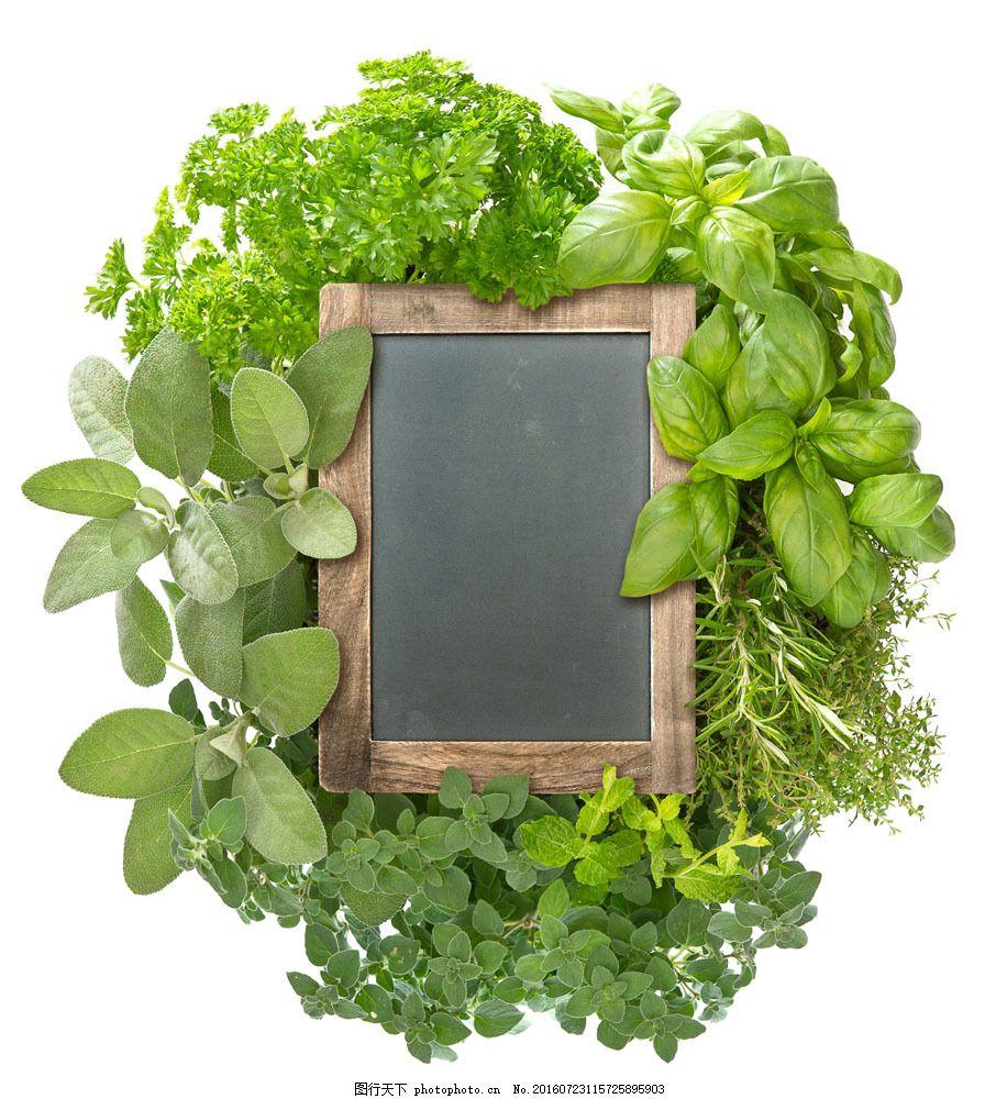 绿叶围绕的空白黑板 绿叶围绕的空白黑板图片素材 绿色植物 蔬菜图片
