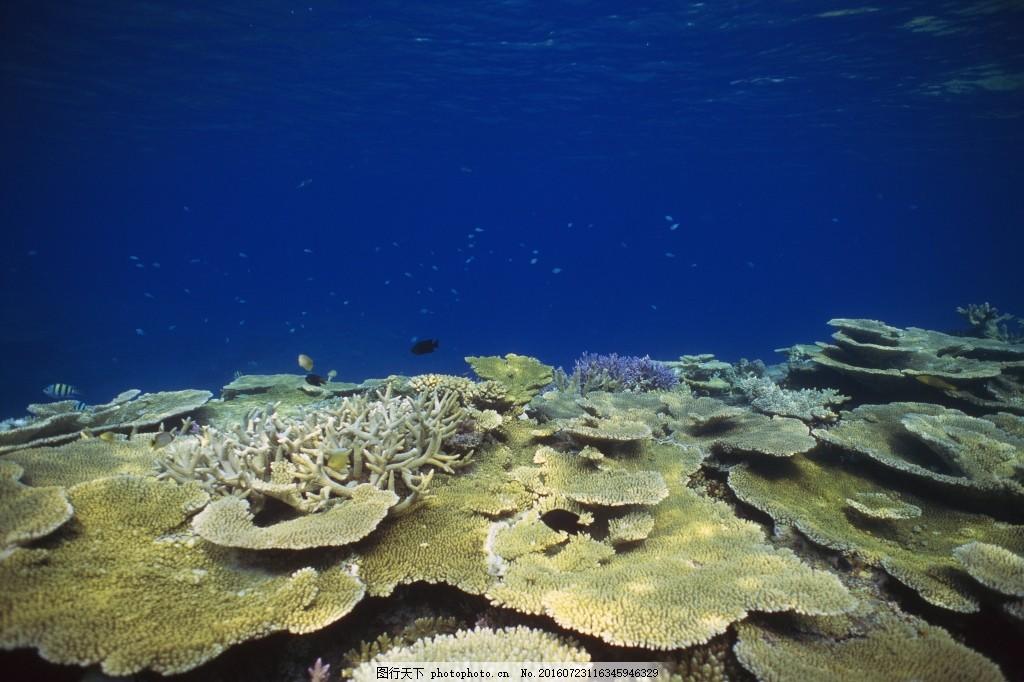 海底珊瑚素材 海底 珊瑚 蓝色 大海 素材