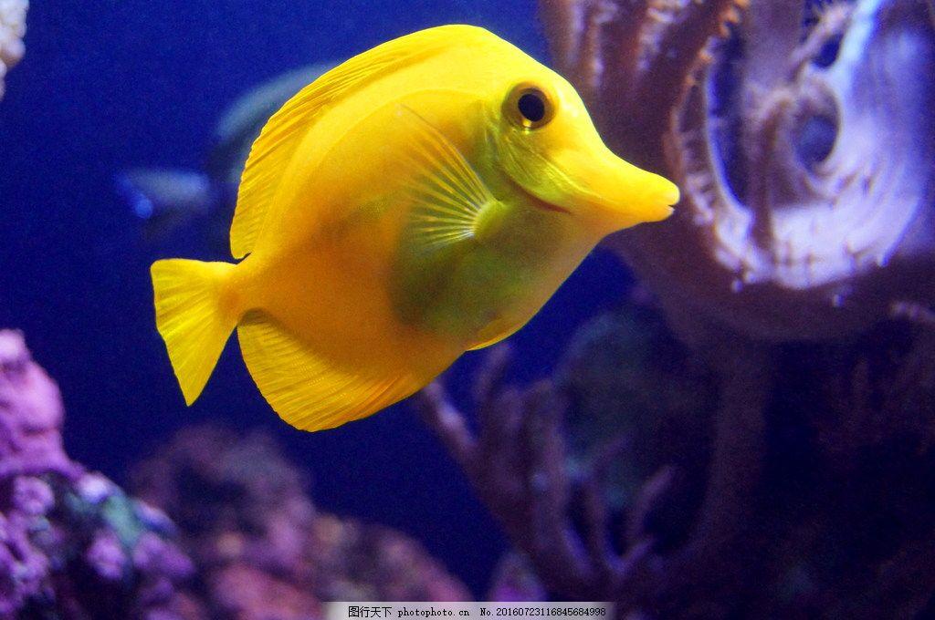 壁纸 动物 鱼 鱼类 1024_680