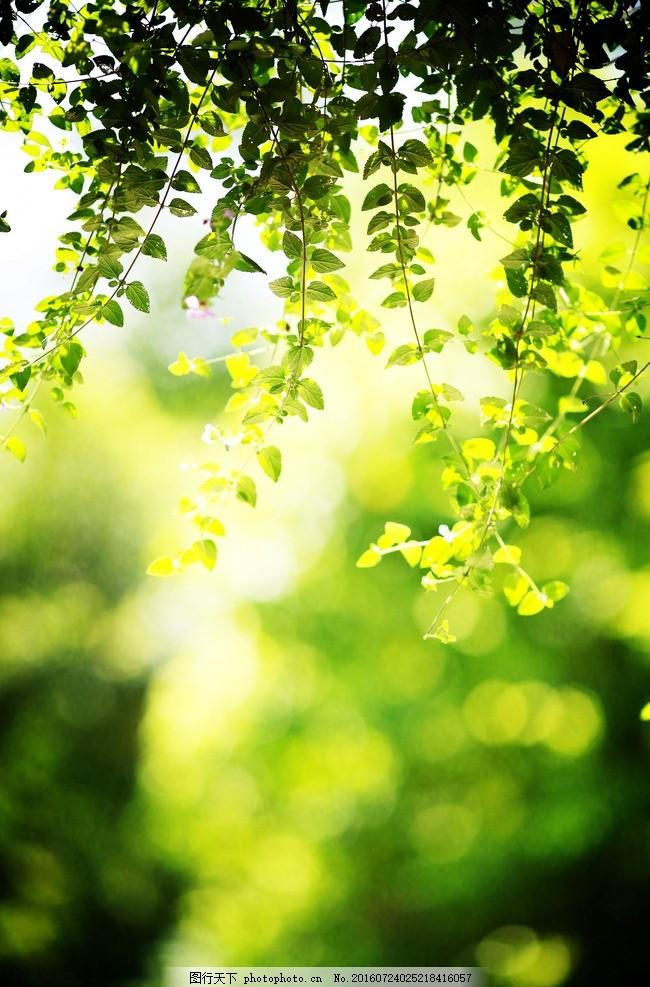 夏天的花 花 树叶 叶子 绿叶 夏天的味道 摄影 生物世界 树木树叶 72