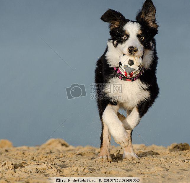 奔跑的狗 狗 可爱 奔跑 球 地面 黑白     红色 jpg