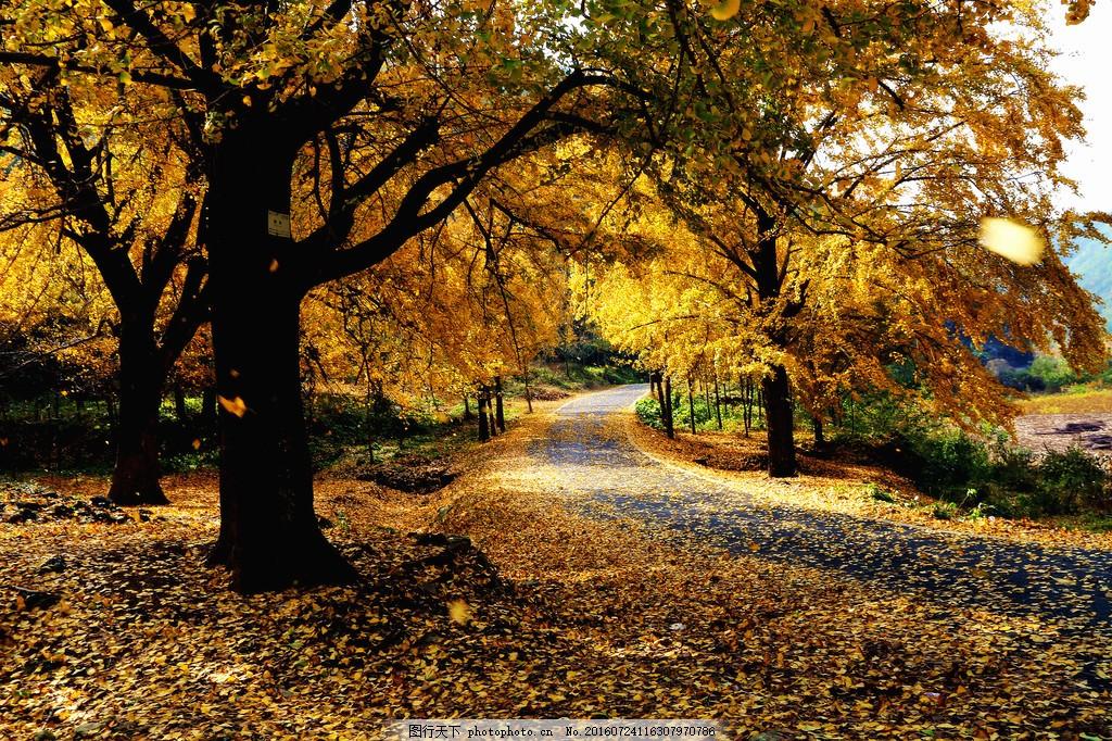 秋天小路风景图片