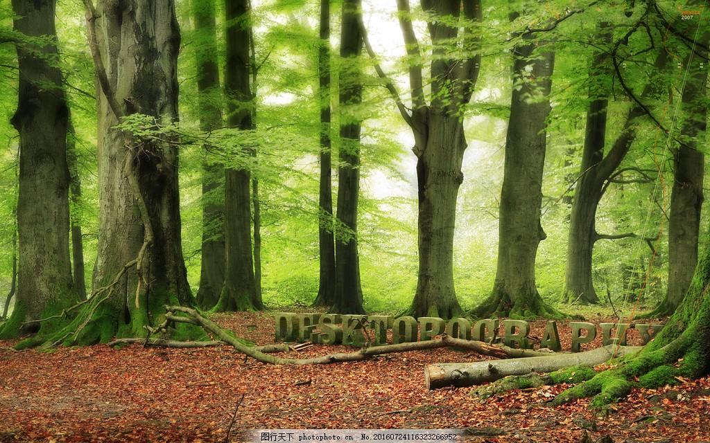 绿色森林图片