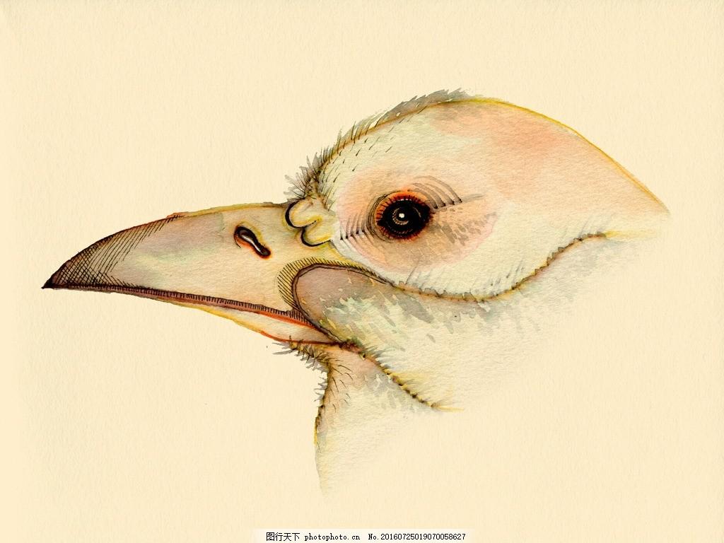 虫鸟画 花鸟画 画鸟 画小动物 鱼类 植物 画花朵 临摹 学习绘画 水彩