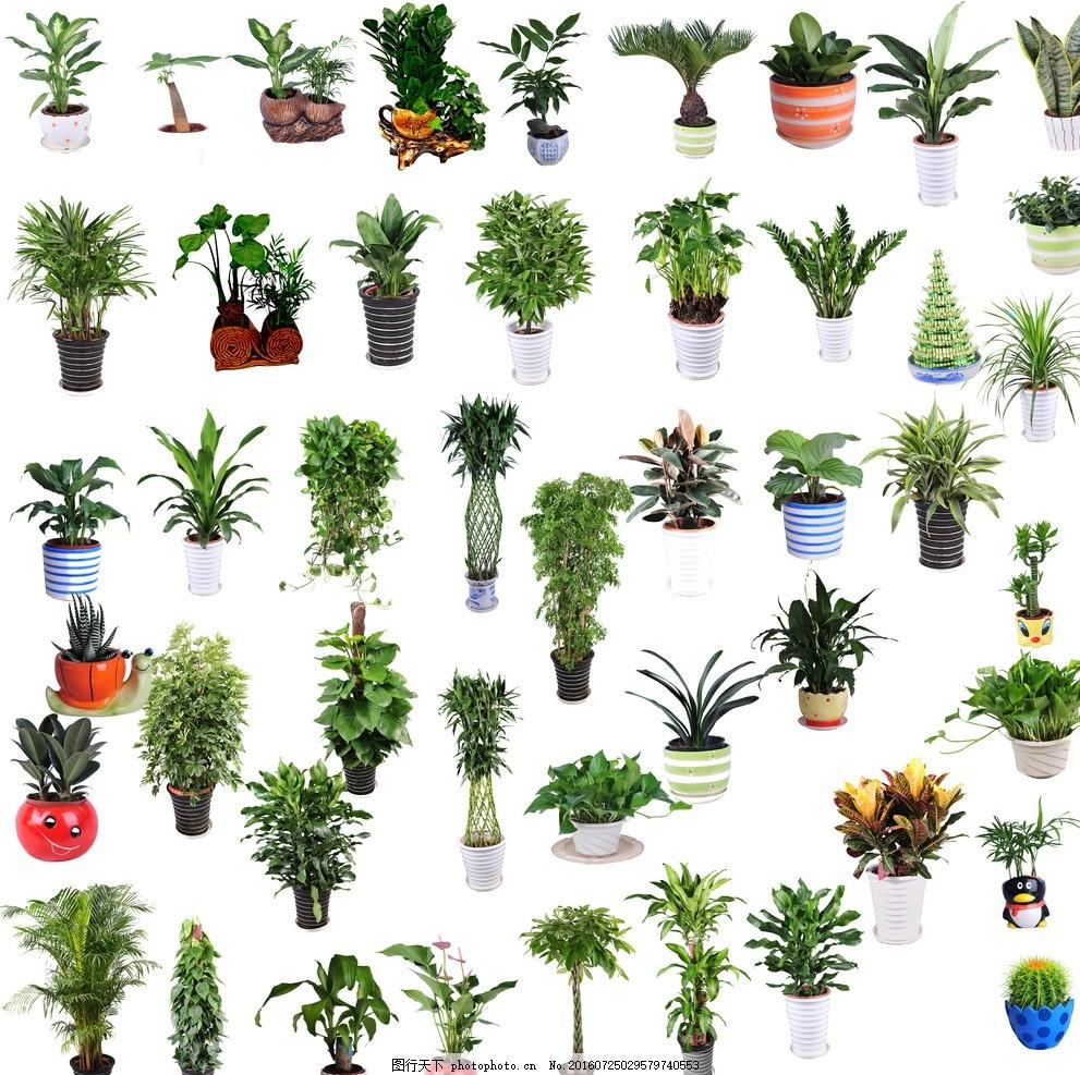 绿植分层 室内摆饰 绿色 植物 植物花盆 盆栽素材 盆栽大全 花草盆栽