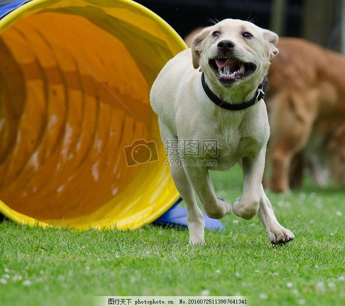 可爱的小动物 草地 树叶 绿色 犬只 狗狗 小狗 红色