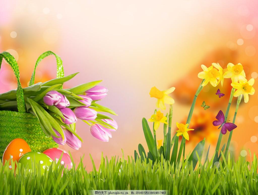 花草意境唯美图片素材 唯美花朵 草地 草丛 蝴蝶 小草