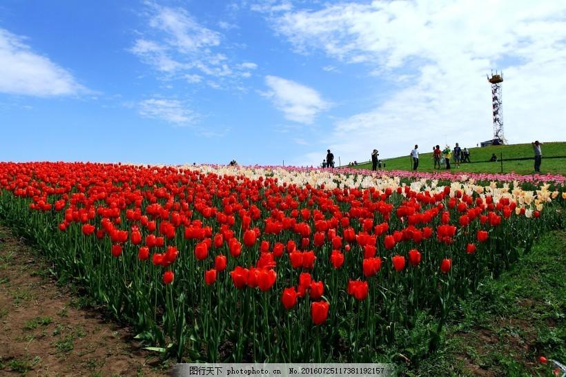 新疆江布拉克草原风景
