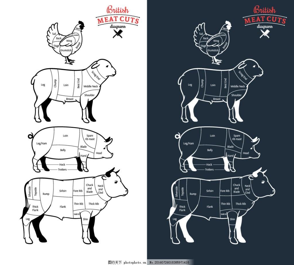 家禽家畜肉类结构 卡通鸡 卡通羊 猪肉部位 卡通猪 猪肉结构图 动物