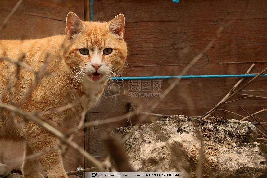 转过头来的小猫 可爱 宠物 动物 性质 转头 小猫 猫耳朵 嘴巴