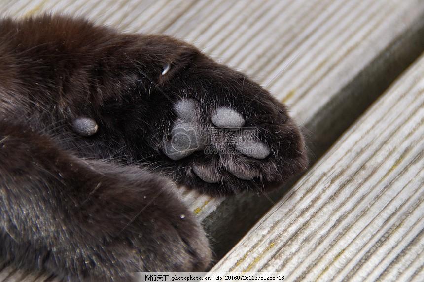 黑色的动物爪子