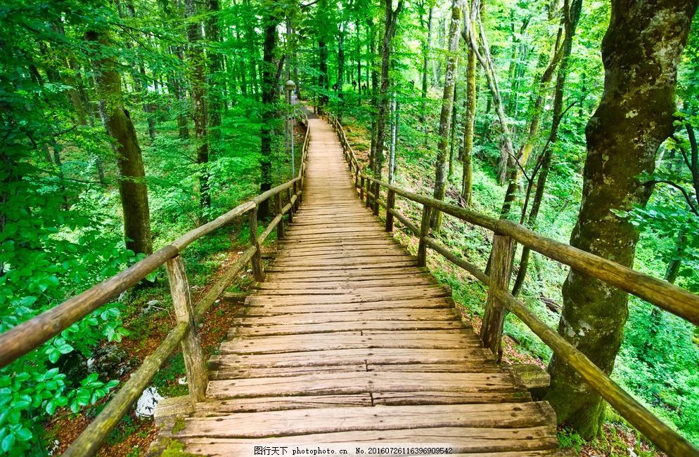 秋天森林小桥流水高清 公园秋景 秋韵 小河 小溪 秋色如画 树林