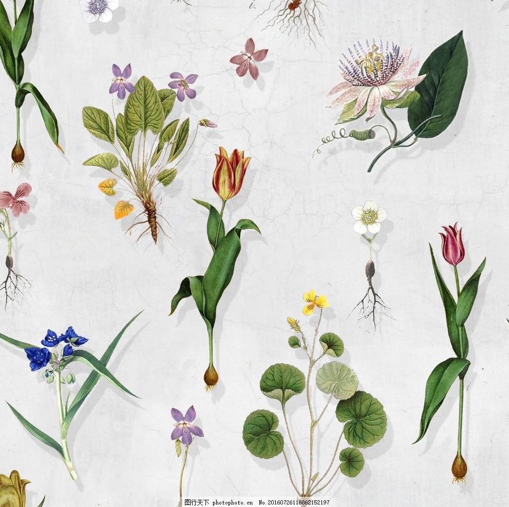 植物花卉组合设计