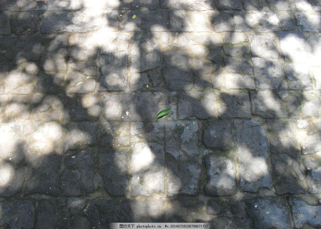 枣树下的斑驳光影 光影 树荫 光斑 阳光照射 枣树下的阴影 背景图片