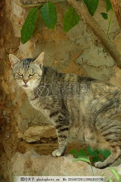 猫 宠物 猫科动物 数万工具包 动物 树叶 树干 枝干 小猫 猫咪 眼睛